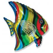 Тропическая рыбка, гелиевый, фольгированный шар